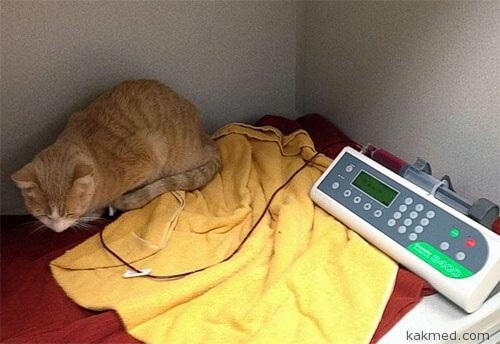 Ксенотрансфузия от собаки к кошке
