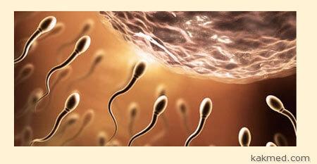 Сперма бога