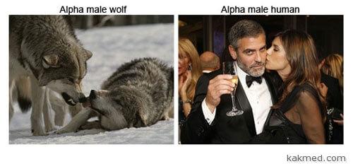 Как стать альфой