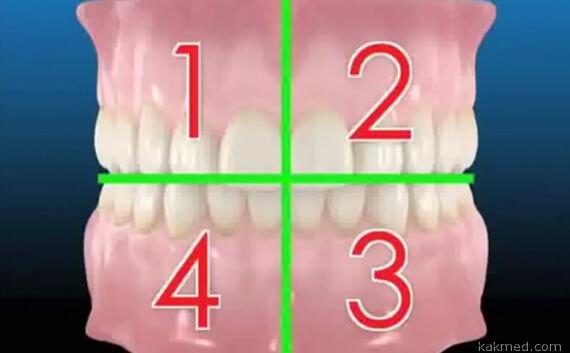 разделение ротовой полости на квадранты
