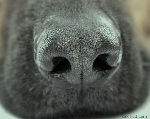 01-dog-nose