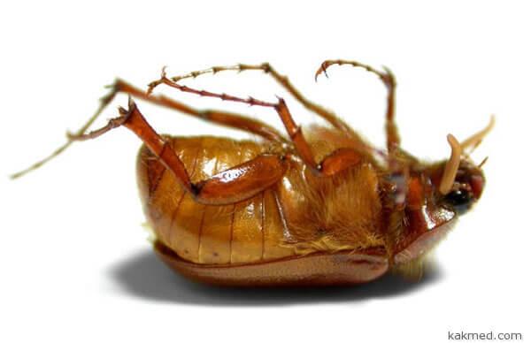 Безвредных инсектицидов не бывает