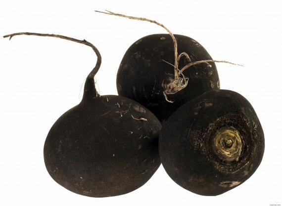 Черная редька