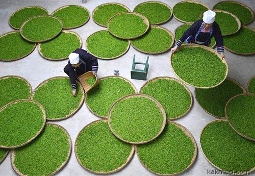 Из чего делают китайский чай