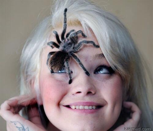 Как перестать бояться пауков
