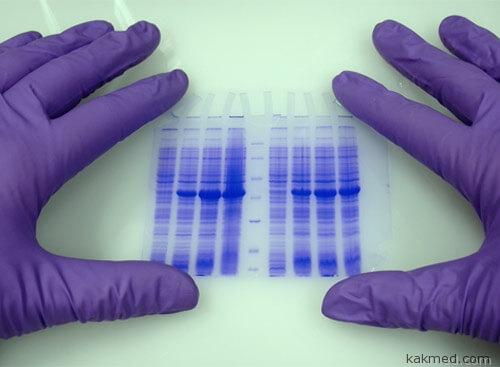 Генетические ребусы долголетия