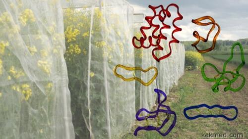 Растительные циклотиды