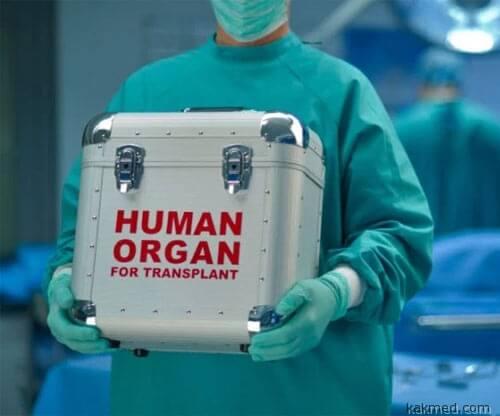 03-organ-box