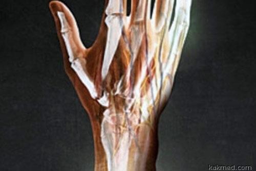 01-regrow-limbs