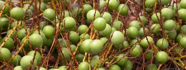 Плоды пальмы сиреноа
