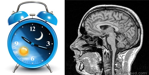 01-brain-circuit-sleep-wake