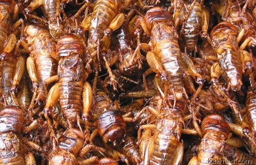 01-fried-crickets