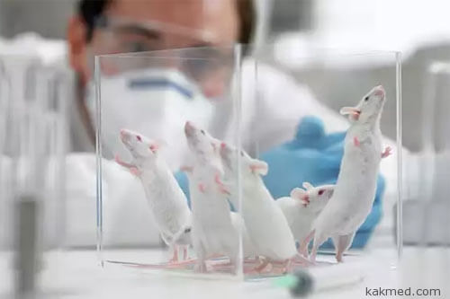 04-lab-mice