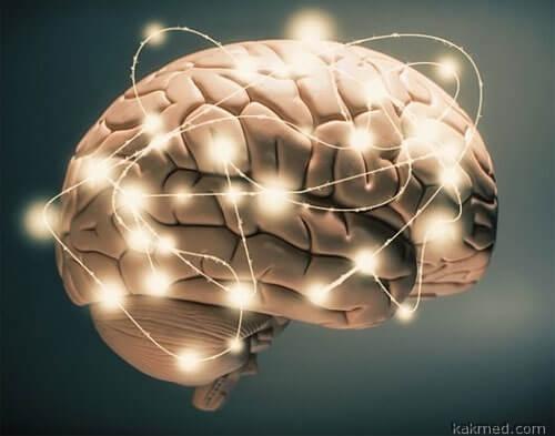 02-brain-connectivity
