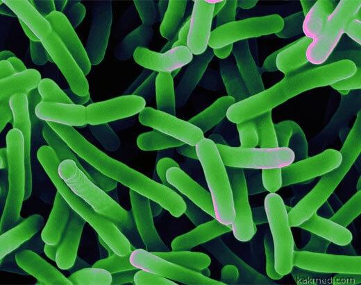 бифидобактерии в кишечнике