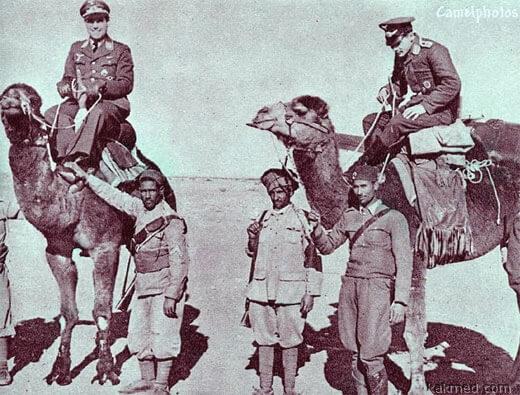лечение верблюжьим калом