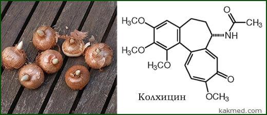 колхицин из шафрана