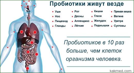 пробиотики в организме